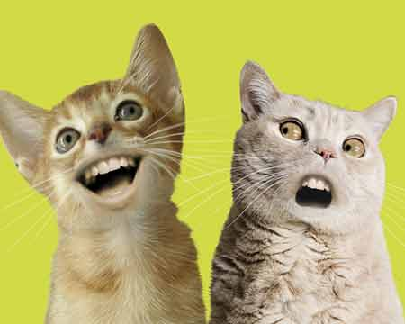 numacats_01.jpg