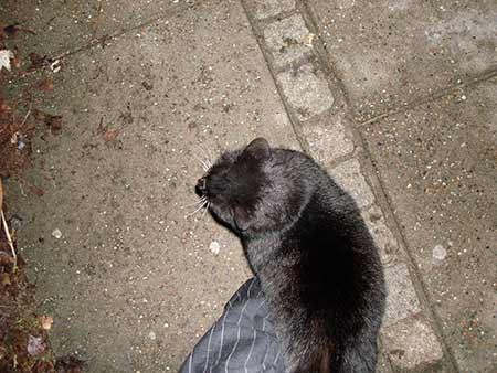 black_cat_01.jpg