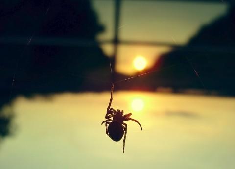 spider-01